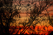 The sun sets behind a bosque along the Tanque Verde Creek, Sonoran Desert, Tucson, Arizona, USA.