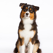 20160806 Dog Audition