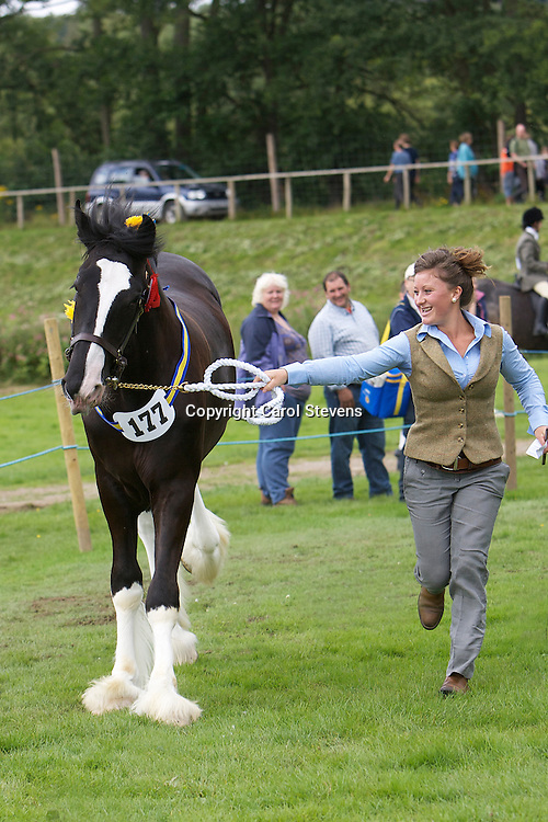 Heavy Horse Showing Classes at Ripley Show 2011<br />