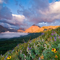 wildlife flowers cloudy sky, blackfeet reservation