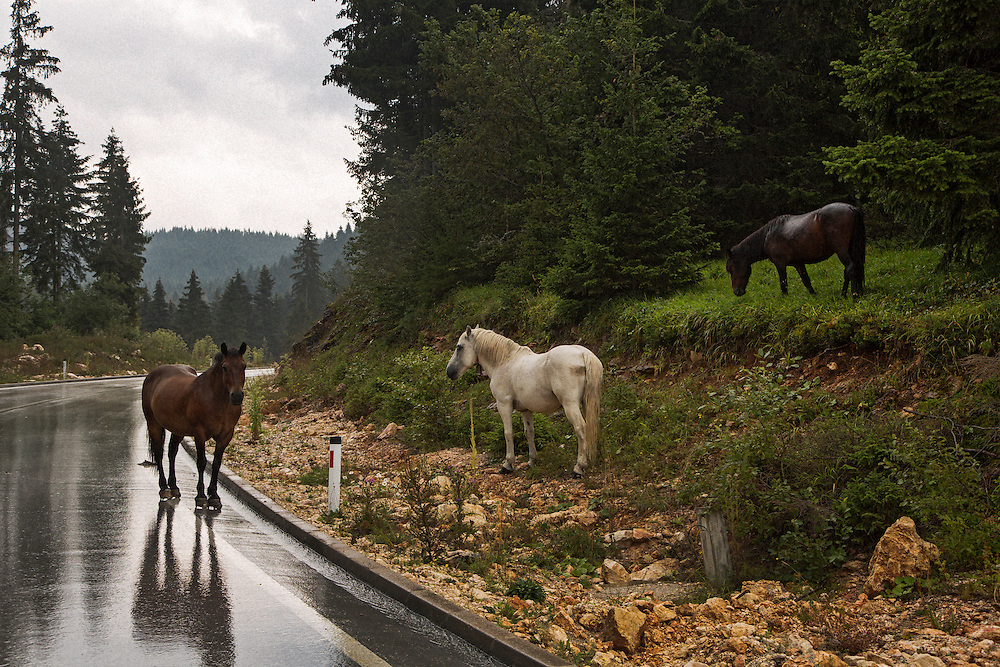 Horses alongside a new built road leading in to the hills from Istocno Sarajevo (East Sarajevo), Republika Srpska, Bosnia and Hercegovina