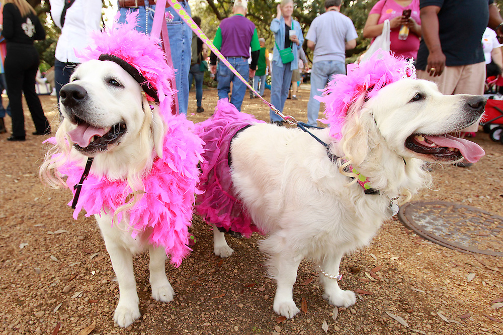 """Dogs and their human companions participate in the Mystic Krewe of Barkus parade in the French Quarter of New Orleans, Louisiana on Sunday, January 27, 2013. This years theme was """"Tails & Tiaras Here Comes Honey Bow Wow."""" This is the 18th year the canine oriented parade has taken place."""