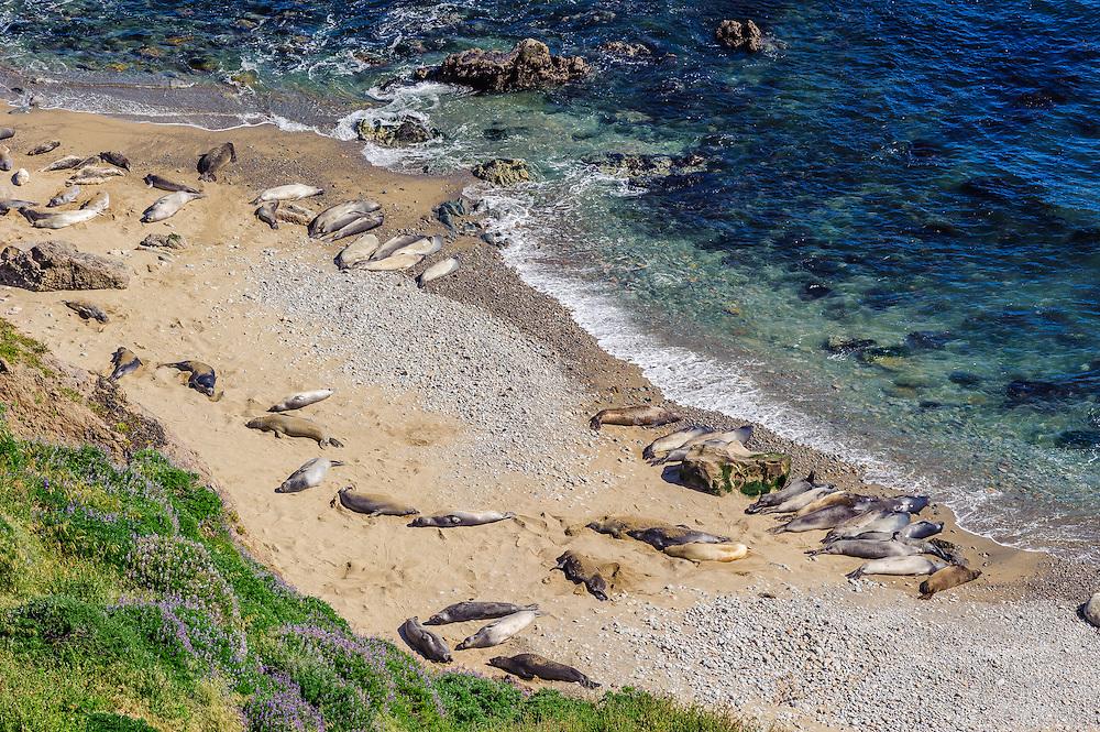 Seals, Point Reyes National Seashore, California