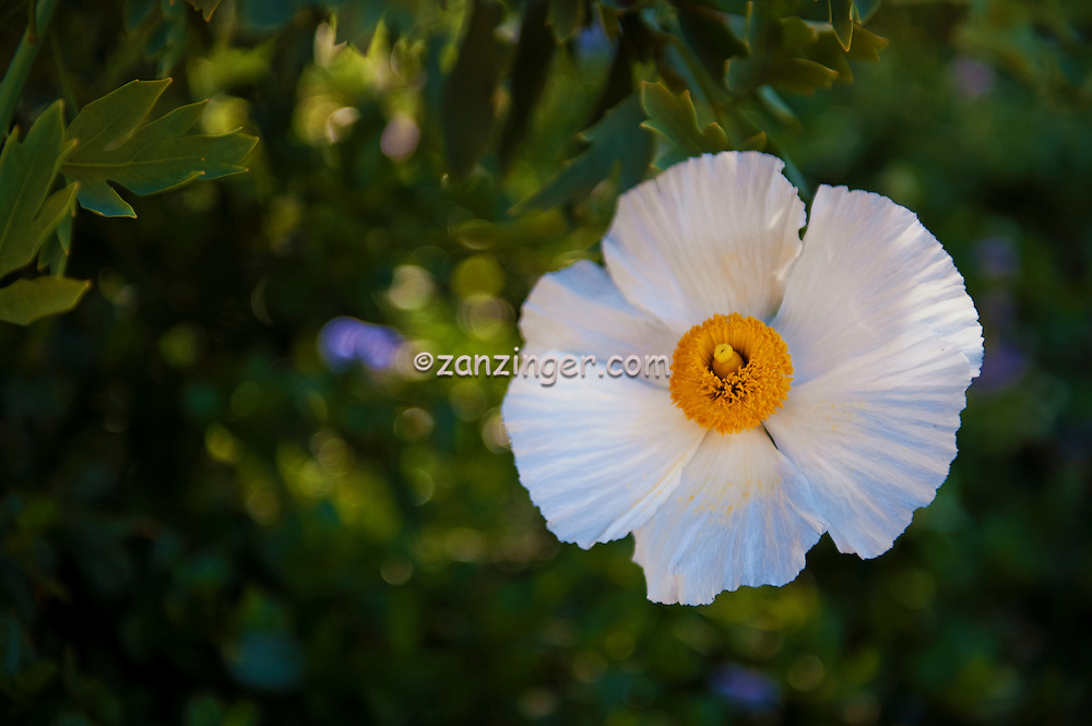 White flower yellow center achillea ptarmica gypsy white malibu white flower yellow center achillea ptarmica gypsy white malibu mightylinksfo