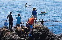 Tourists watch on as a pod of Killer Whales pass by Lime Kiln State Park on San Juan Island, Washington, USA.