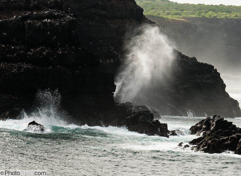 Surf crashes against sea cliffs of Española (Hood) Island, the oldest of the Galapagos Islands (formed 3 million years ago), a province of Ecuador, South America. Española is becoming a rocky, barren land with little or no vegetation, with large bays, sand and soft shingle which attracts a healthy number of Galapagos Sea Lions. The English named it Hood Island after Viscount Samuel Hood. Tourists come to see the Waved Albatross and the mating dances of blue-footed boobies. Two spots are especially popular with visitors: Bahía Gardner, which has a lovely beach; and Punta Suárez, of interest because of its varied bird-life. This island has its own species of animals, such as the Española Mockingbird, which has a longer and more curved beak than the one on the central islands; the Española lava lizard; the Marine Iguana, which has red markings on its back; and others. Boobies, Swallow-tailed Gulls and other tropical birds live here. In 1959, Ecuador declared 97% of the land area of the Galápagos Islands to be Galápagos National Park, which UNESCO registered as a World Heritage Site in 1978. Ecuador created the Galápagos Marine Reserve in 1998, which UNESCO appended in 2001.