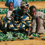 Intermón Oxfam grants credits to women's cooperatives to buy seeds and tools together, and therefore, lower costs. They pay the credit back by selling the extra vegetables from the three or four annual harvests. Ari Hara, Mauritania.
