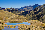 Golden tussock and tarns along the hike to Mount Burns. Mt Burns is a part of the Hunter Mountains, and can be easily accessed via Borland Road.