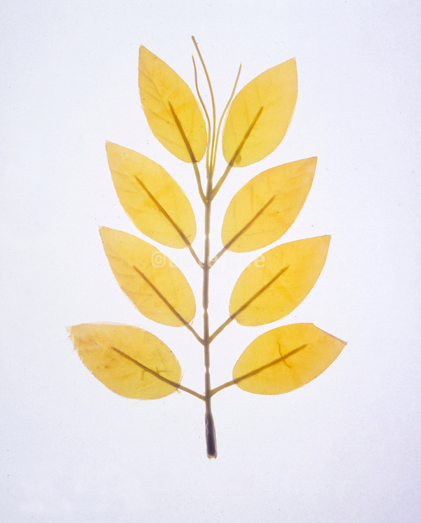 twig made from plastic with yellow leaves