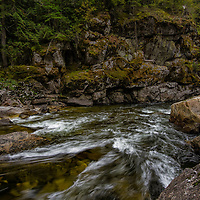 Inland temperate rainforest along the Lochsa River, Idaho