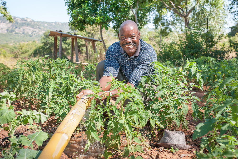 CAPTION: Benjamin demonstrates how he's using bamboo pipes to irrigate his garden near the Bikita Rural Hospital. Soon, sprinklers will mean that farmers no longer have to use outdated, difficult and wasteful irrigation methods like this bamboo pipe system. LOCATION: Near Bikita Rural Hospital, Bikita District, Masvingo Province, Zimbabwe. INDIVIDUAL(S) PHOTOGRAPHED: Benjamin Dziro.