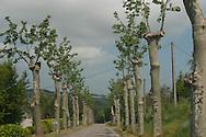 landscape. Gers - France