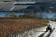 A farmer drives his tractor alongside a vineyard adjacent to The Glenora Wine Cellars on Seneca Lake's west side, in Dundee, NY, Friday, Nov. 14, 2014.<br /> (Heather Ainsworth for The New York Times)