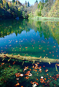 Submerged log and autumn leaves, far bank of lake visible. Plitvice National Park, Croatia