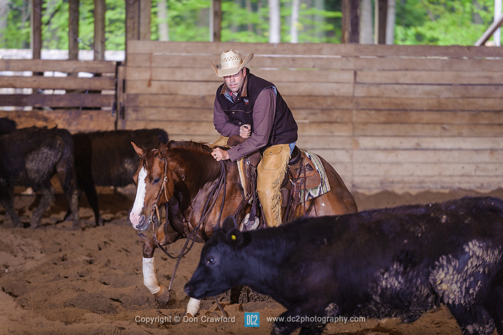 May 21, 2017 - Minshall Farm Cutting 4, held at Minshall Farms, Hillsburgh Ontario. The event was put on by the Ontario Cutting Horse Association. Riding in the Non-Pro Class is Eric Van Boekel on Mister Boss Hog owned by the rider.