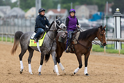 Derby 142 hopeful Destin with Ovel Merida up ponied by Genevieve Londono with Moe were on the track for training, Tuesday, May 03, 2016 at Churchill Downs in Louisville.