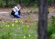 Cameron Art Museum, The Museum School photography class. This week, Plein Air Photography visited the Stanley Rehder Carnivorous Garden. Spring is in the air and the hungry plants are showing off magnificent blooms. Pollenating bees move from blossom to blossom as, below, lessor insects are slowly digested in deadly pools of enzyme laden water. Photo by Alan Cradick.