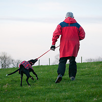 Albert in his red coat on a lovely walk. Pulling and playing with his lead.
