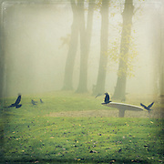 Playground on a foggy November morning with only crows playing around...