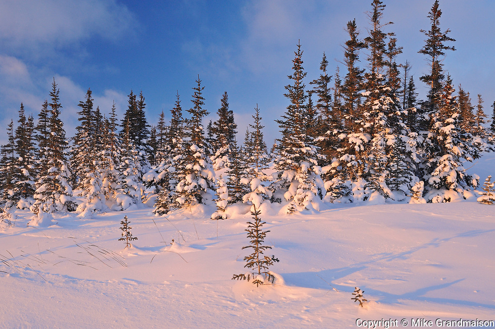 Winter on the tundra, Churchill, Manitoba, Canada