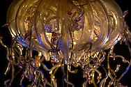 NLD, Niederlande: Phisophora magnifica, Staatsqualle, dieses Glasmodell stammt aus dem Werk der naturwissenschaftlichen Glaskünstler Leopold Blaschka (1822-1895) und Sohn Rudolf Blaschka (1857-1939). Zwischen 1863 und 1890 entstanden in der Dresdner Werkstatt Tausende Glasmodelle wirbelloser Meerestiere, die ihren Weg in Museen und Universitäten der ganzen Welt fanden. Diese Nachbildungen verblüffen bis heute, denn sie sind morphologisch fehlerfrei und halten naturwissenschaftlichen Betrachtungen bis ins Detail stand - die perfekte Verschmelzung von Kunst und Naturwissenschaft. Die Blaschkas hatten keine Lehrlinge und es gibt keine weiteren Nachfahren. Vater und Sohn haben das Geheimnis ihrer einzigartigen Technik mit ins Grab genommen, Blaschka-Sammlung, Universitätsmuseum, Utrecht | NLD, Niederlande: Phisophora magnifica, Siphonophora, this glass model originated from the work of the scientific glass artists Leopold Blaschka (1822-1895) and his son Rudolf Blaschka (1857-1939). Between 1863 and 1890 thousands of glass models of invertebrates sea animals developed in the workshop in Dresden, which found their way in museums and universities of the whole world. These reproductions amaze until today, because they are morphologically exact and withstand scientific examinations in detail - the perfect fusion of art and natural science. The Blaschkas didn?t have apprentices and it gives no further descendants. Father and son took the secret of their inimitable technology also in the grave, Blaschka-Collection, University Museum, Utrecht |