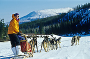 Dog sledding in the Yukon.