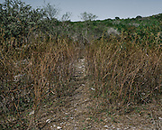 A landscape of Butcher's Hill near Cocula where searchers received a tip about cartel activity in the area. This area is adjacent to the Cocula dump where the 43 students are believed to have been burned.
