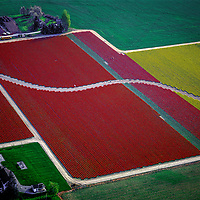 Aerials Tulip Fields