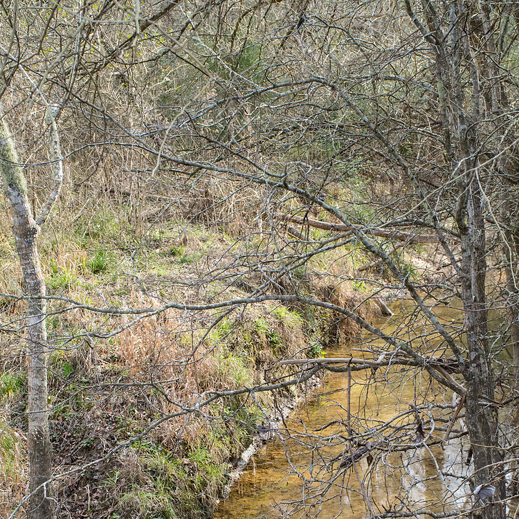 Buckner's Creek near Boulton Creek Road in Muldoon, Texas