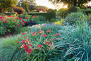 Photographed in July, just after dawn, the Lanhydrock Garden at Wollerton Old Hall Garden, Wollerton Shropshire, features hot coloured plants from July to September. These include Achillea, Hemerocallis, Helianthus, Lychnis and Roses