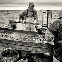 Joe Lawson and his helper fill the 4th bushel. In the winter, water on the floor of the boat usually freezes. This was a good day for Joe; after 9 hours in the Bay, 14 oyster bushels were full.<br />Each bushel contains between 100-150 oysters and will be sold for 40 dollars. By the time the oysters get to a restaurant table, they will cost in average 3 dollars each.