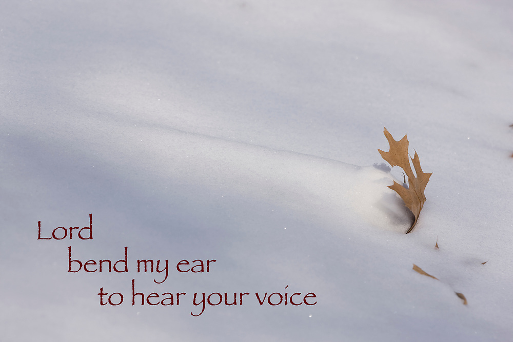 "Mini-snowdrift forms behind a wind-blown oak leaf - with quote: ""Lord, bend my ear to hear your voice."""