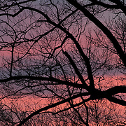 The silhouette of leafless trees in winter at Appleton Farms, Ipswich, MA
