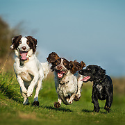 Benji, Lola and Spike