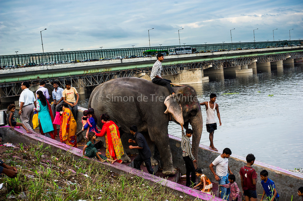 2nd September 2014, Yamuna River, New Delhi, India. An elephant ridden by a handler descends steps and passes Hindu worshippers on the 5th day of the Ganesh Chaturthi religious festival at the Yamuna River, New Delhi, India on the 2nd September 2014<br />