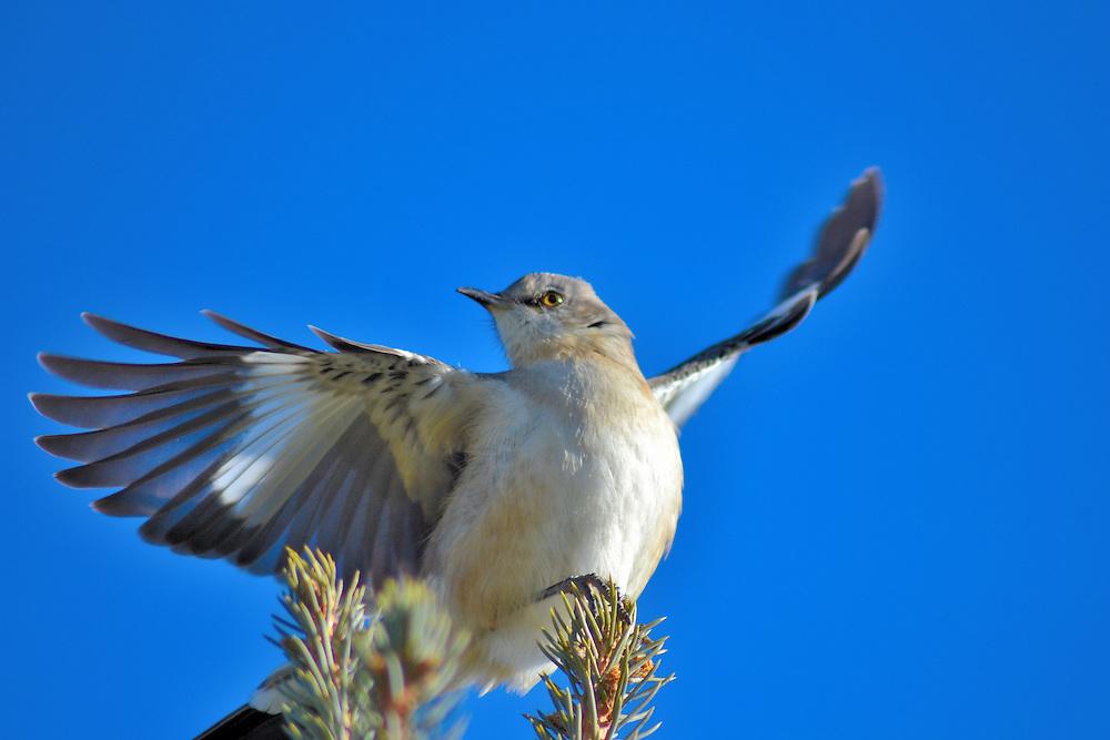 Ohio bird