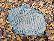 "Billion-year-old seabed ripples are fossilized in a blue rock pattern on broken yellow and purple rocks above Logan Pass, in Glacier National Park, Montana, USA. Published in ""Light Travel: Photography on the Go"" book by Tom Dempsey 2009, 2010. Rocks in the park are primarily sedimentary layers deposited in shallow seas over 1.6 billion to 800 million years ago. During the tectonic formation of the Rocky Mountains 170 million years ago, the Lewis Overthrust displaced these old rocks over newer Cretaceous age rocks. Since 1932, Canada and USA have shared Waterton-Glacier International Peace Park, which UNESCO declared a World Heritage Site (1995) containing two Biosphere Reserves (1976)."
