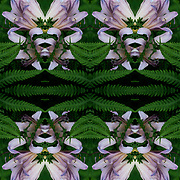 Computer abstract of altered and enhancement of Ferns and Flowers as digital computer art.<br /> <br /> Two or more layers were used to enhance, alter, manipulate the image, creating an abstract surrealistic mirrored symmetry.