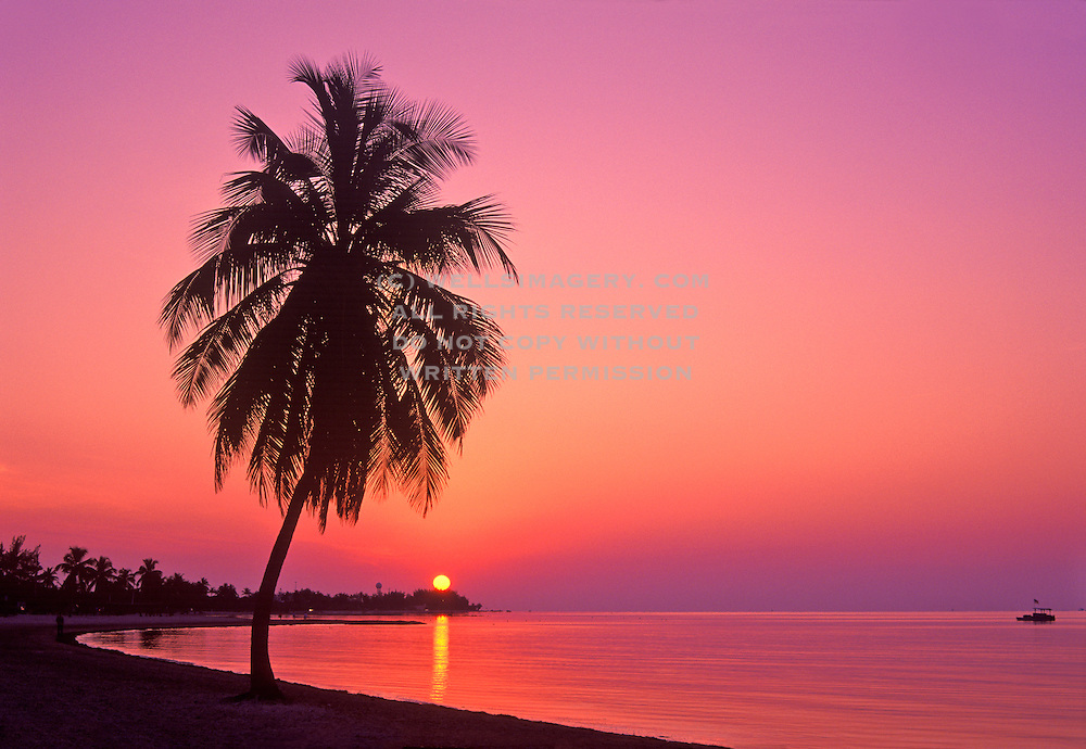 Photos of key west at sunset pictures of palm trees on beach image of palm tree on a beach in key west florida smathers beach at voltagebd Image collections