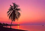 Image of palm tree on a beach in Key West, Florida, Smathers Beach at sunrise