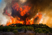 Massive flames and smoke from a fynbos fire, De Hoop Nature Reserve, Western cape, South Africa
