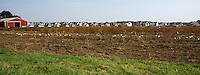 Panorama depicting the encroachment of suburban housing development to rural farming.