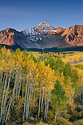Aspen trees in fall color below Wilson Peak (14,017') on the Wilson Mesa near Telluride, Colorado. Wilson Peak lies within the Lizard Head Wilderness, Uncompahgre National Forest in southwestern Colorado's southern San Juan Mountains.