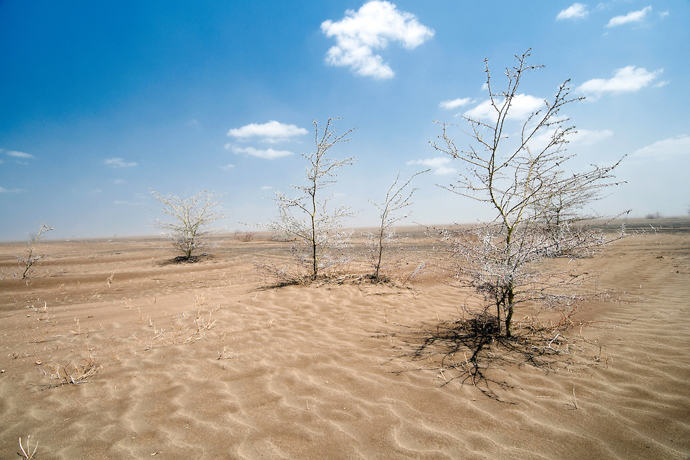 Photos along the road from Garissa to Wajir, North Eastern Kenya. The area has not seen any rain since April 22nd, 2010.