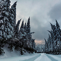 Road in a white snow forest