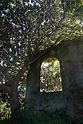 Mauritius. Ruins of an old sugar cane mill at Grande Rosalie.