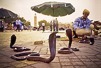 Snake charmer with a black cobra (Naja sp), Marrakesh , Morocco , North Africa Image by Andres Morya