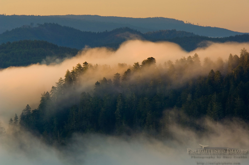 Sunrise light on coastal fog over hills near the mouth of the Klamath River, Redwood National Park, California