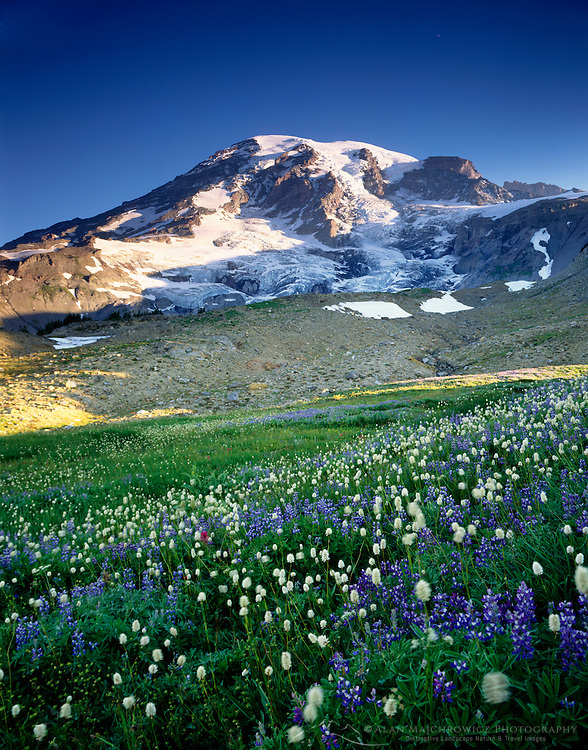 Wildflower meadows, Mount Rainier National Park Washington USA