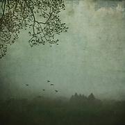 Nebel über Waldlandschaft, texturierte Fotografie, Wuppertal,Deutschland